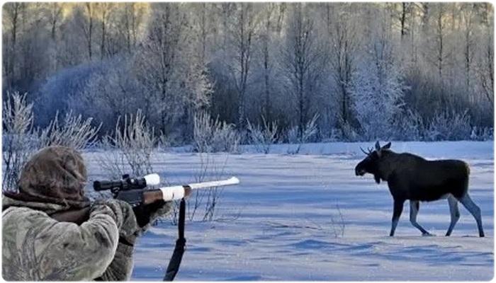 Куда стрелять в лося