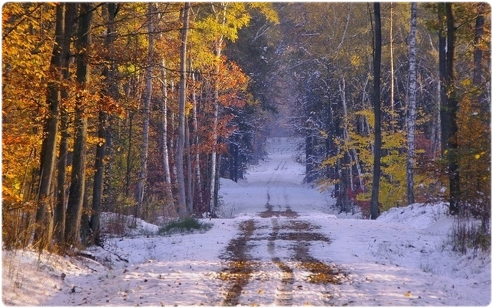 Охотничий календарь: Ноябрь