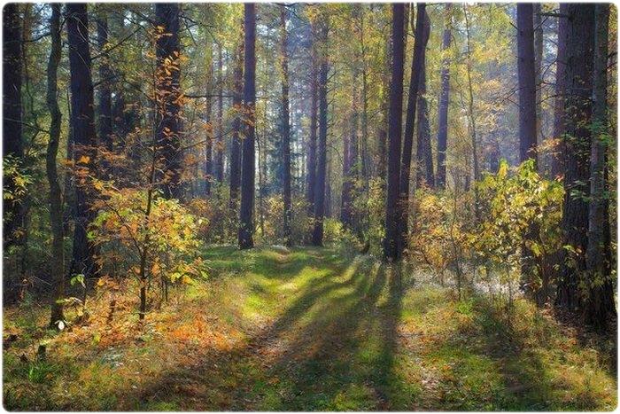 Охотничий календарь: Сентябрь