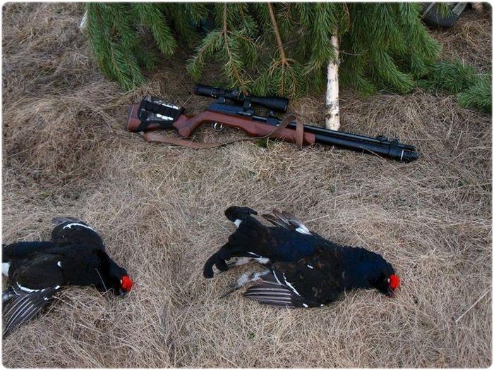 Ружье для охоты на тетерева