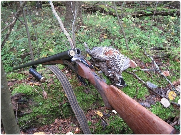Ружье ИЖ-54 на охоте
