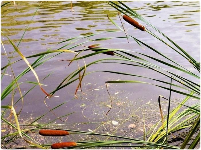 Рыбное место на реке