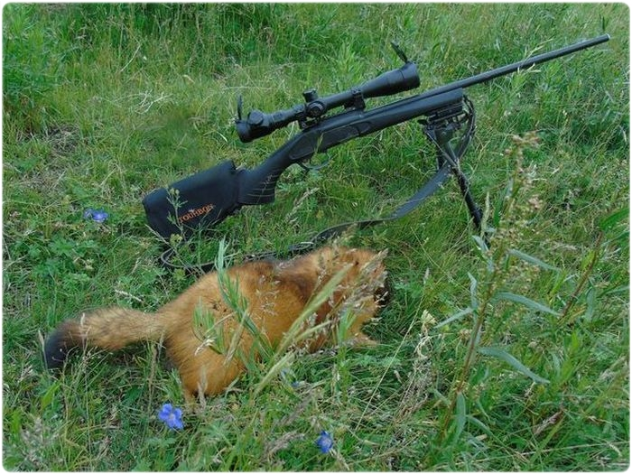 Винтовка для охоты на байбака