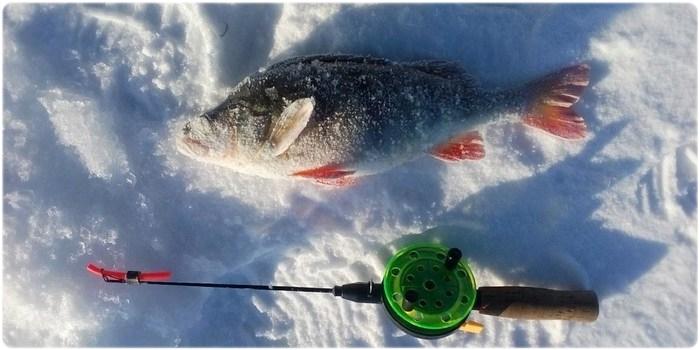 Зимняя удочка для ловли окуня