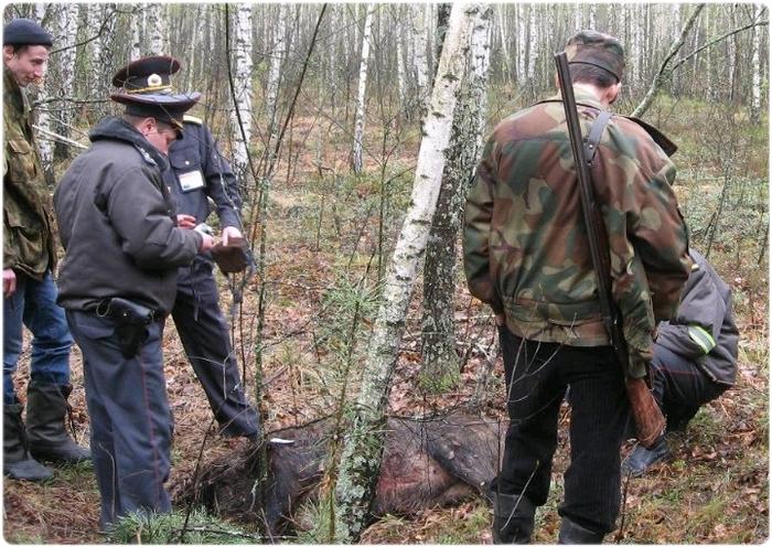 Браконьеры на охоте