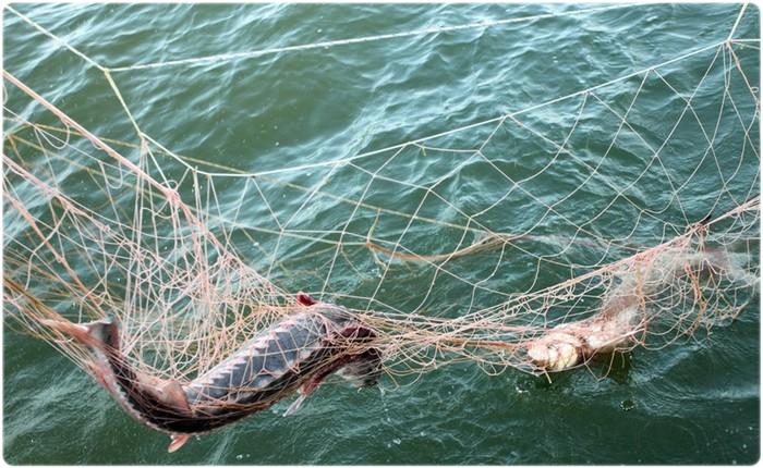 Чем запрещено ловить рыбу