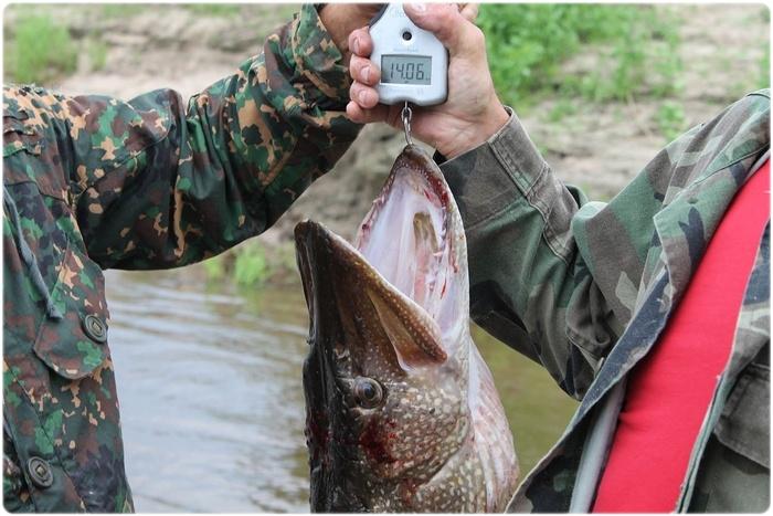 Ограничения на вылов рыбы
