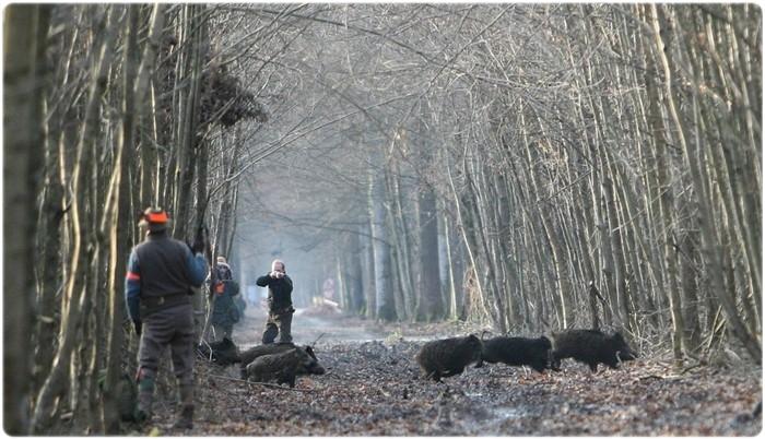 Требования техники безопасности при осуществлении охоты